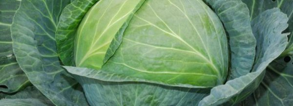 Капуста Валентина - характеристика сорта, выращивание и уход