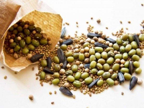 Как правильно собирать и хранить семена зимой