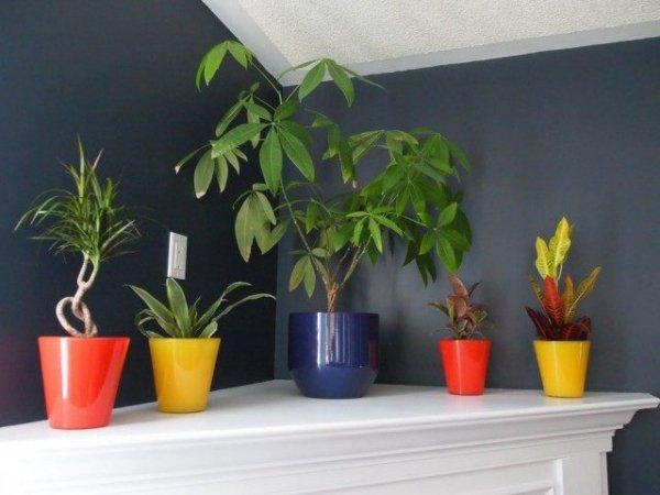 Лучшие теневыносливые растения для дома фото и названия с описанием