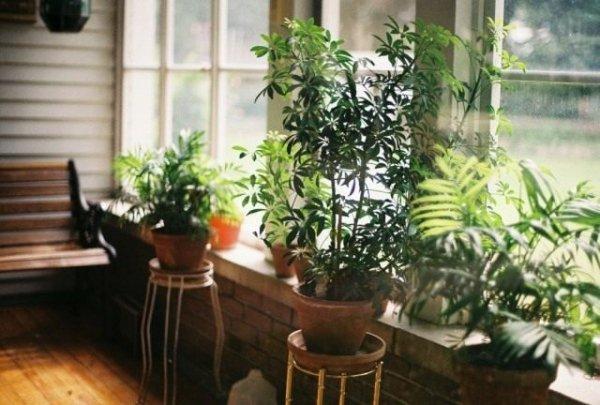 Помощь комнатным растениям после отпуска. Реанимация растений после длительной поездки