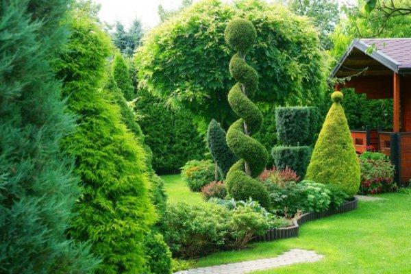 Цветник с хвойными - правила организации и выбор растений с фото и видео