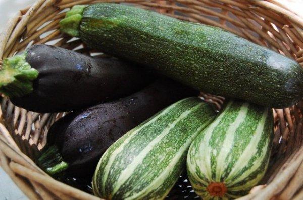 Как хранить кабачки и тыкву зимой в квартире до весны
