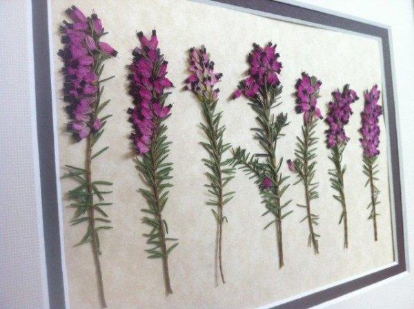 Как сделать гербарий своими руками - инструкция с фото и видео