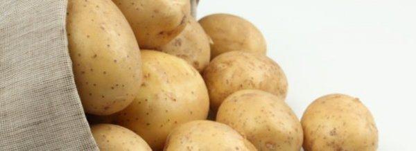 Картофель Удача - описание сорта, фото, посадка и уход + видео