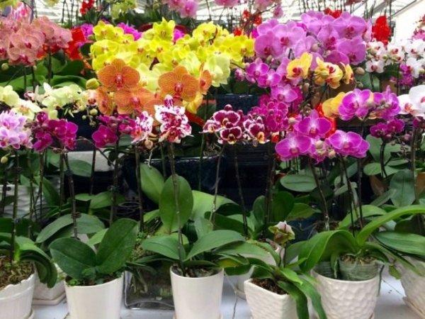 Правила покупки комнатных растений и цветов
