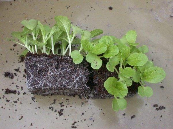 Способы выращивания рассады с фото и видео