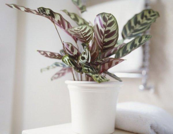 Почему не растут комнатные растения? Проблемы замедленный рост
