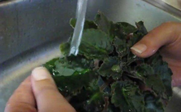 Как правильно мыть листья фиалки? Способы с фото и видео