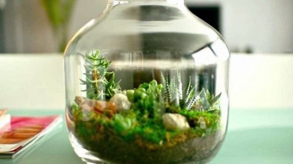 Флорариум своими руками или сад в в сосуде с фото и видео