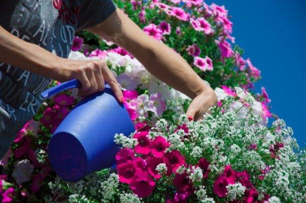 Цветы на балконе все лето. Названия и уход. Фото и видео