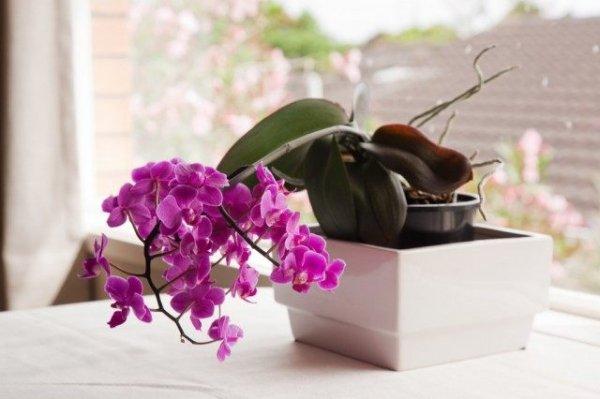 Уход за орхидеями для новичка ТОП-7 советов с фото и видео