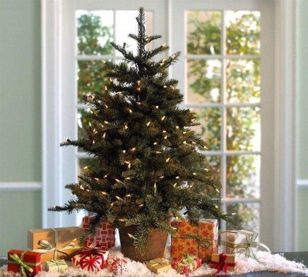 Как сохранить новогоднее дерево для сада? Ель, сосна, туя, можжевельник, пихта в горшке или кадке до весны.