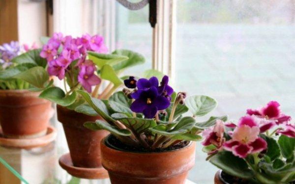 Комнатные растения для северных окон. Уход в домашних условиях. Фото и видео.