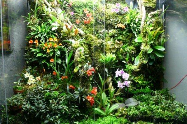 Орхидариум — уютный «дом» для орхидей. Выбор растений. Уход в домашних условиях. Фото и видео