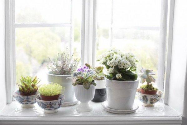 Растения на окне фото и видео. Как уместить много комнатных растений на подоконнике?