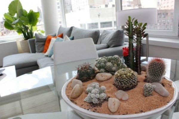 Сад камней в интерьере — особенности создания и выбор растений. Уход. Фото и видео