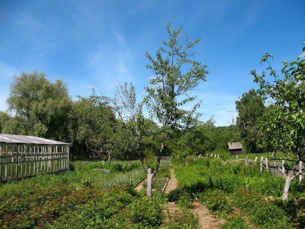 Использование органических удобрений в огороде и видео
