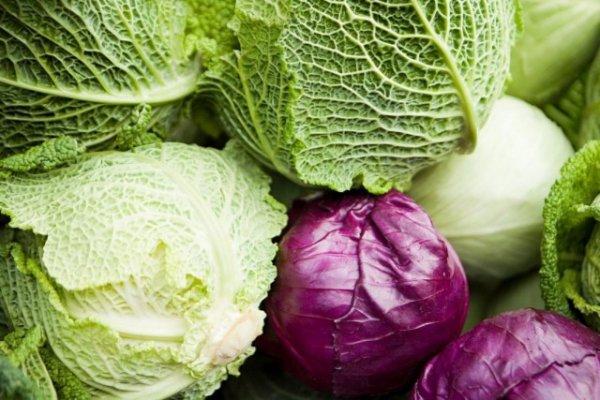 Как хранить свежую капусту до весны - зависит от сорта и условий