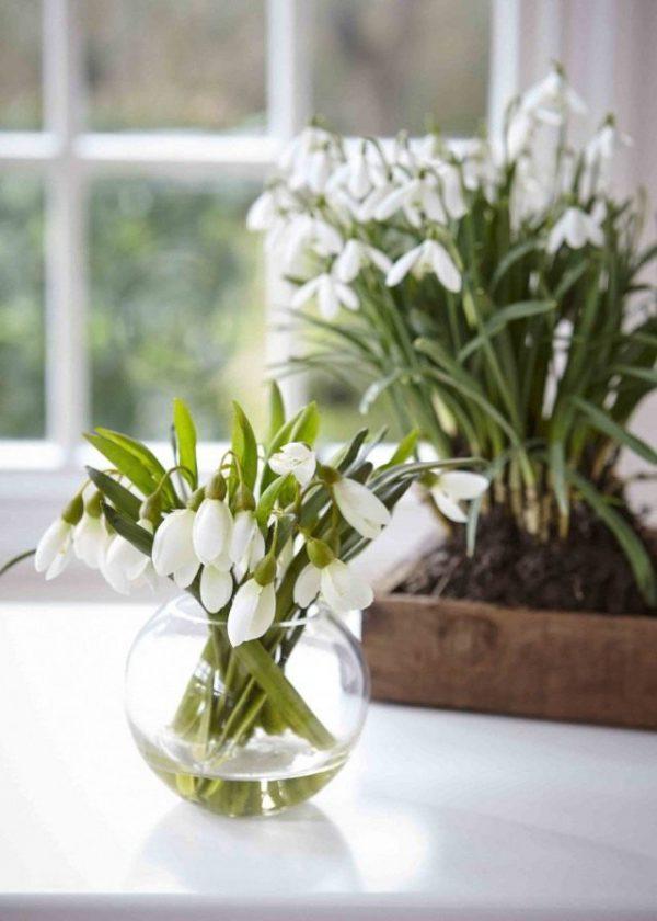 Цветущие зимой комнатные цветы ТОП-10 с фото и названиями