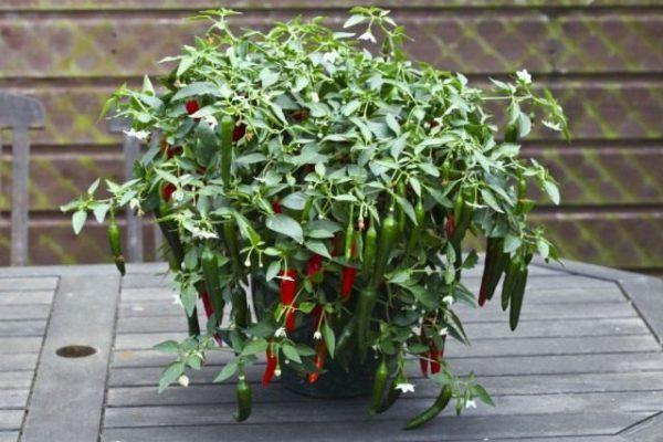 Растения и цветы для кухни фото с названием и описанием