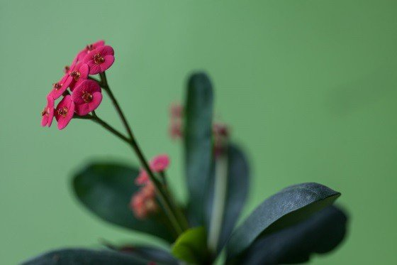 15 растений, которые цветут зимой в помещении