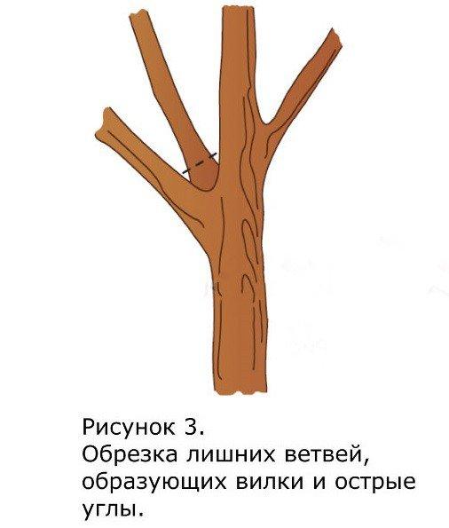 Как правильно обрезать деревья