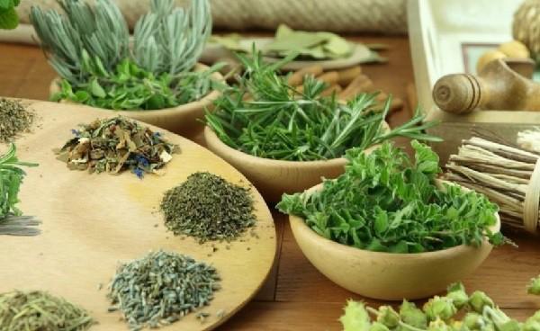 Травы для памяти и рецепты применения