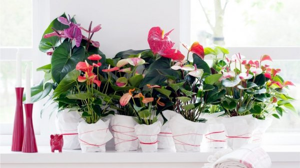 Лунный календарь цветовода на февраль 2019 года для комнатных растений