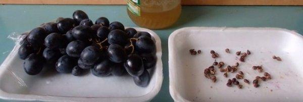 Как вырастить виноград из косточки в домашних условиях. Выращивание в горшке