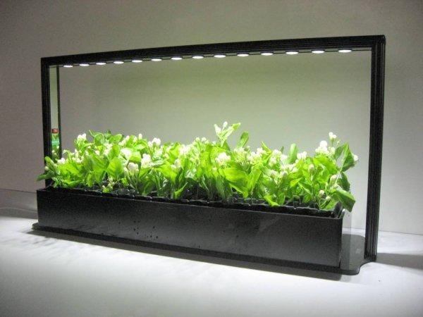 Лампы для выращивания рассады в домашних условиях