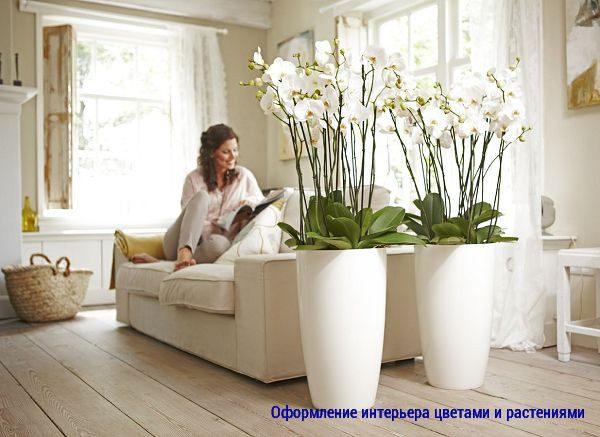 Оформление интерьера цветами и растениями