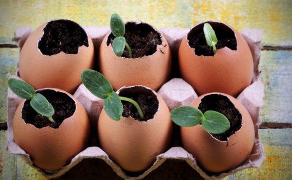 Способы выращивания рассады - ТОП-7 самых необычных