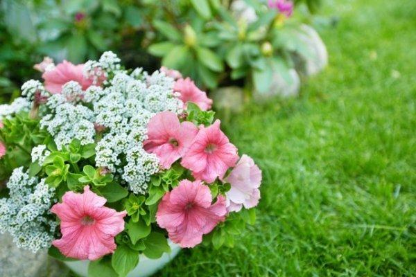 ТОП-10 лучших однолетних цветов для дачи и сада