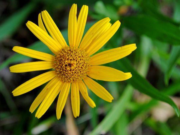 10 растений для здоровья кожи лица и тела
