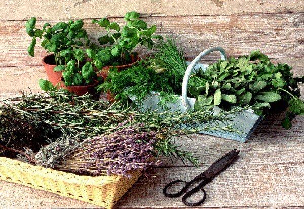 Лекарственные растения: семена в интернет-магазинах