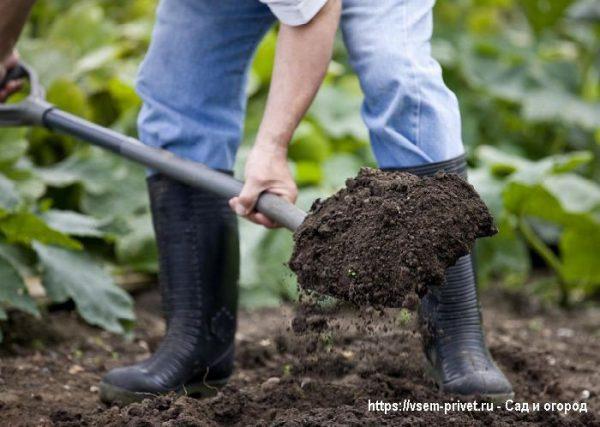 Обработка почвы для повышения урожайности