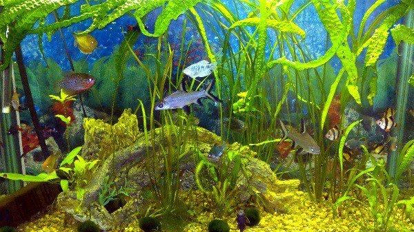 Выбираем рыбок для аквариума