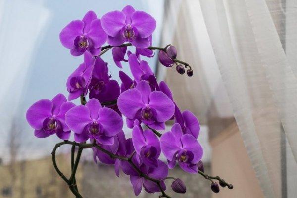 Советы по уходу за орхидеями в комнатных условиях.