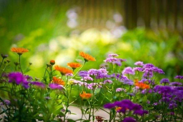 Какие цветы посадить на кладбище?