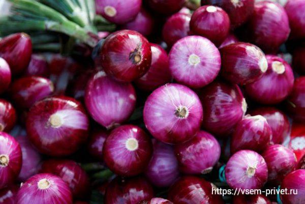 Красный лук — польза и вред, калорийность и применение в кулинарии