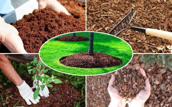 Виды удобрений для сада и огорода