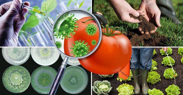 Уход за растениями: решение основных проблем